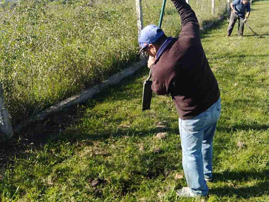 LOS ARBOLES CUMPLEN IMPORTANTES FUNCIONES EN LA VIDA DE LAS PERSONAS